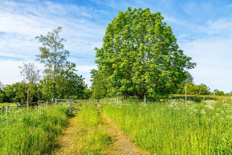 Passeio em um prado do verão fotografia de stock royalty free