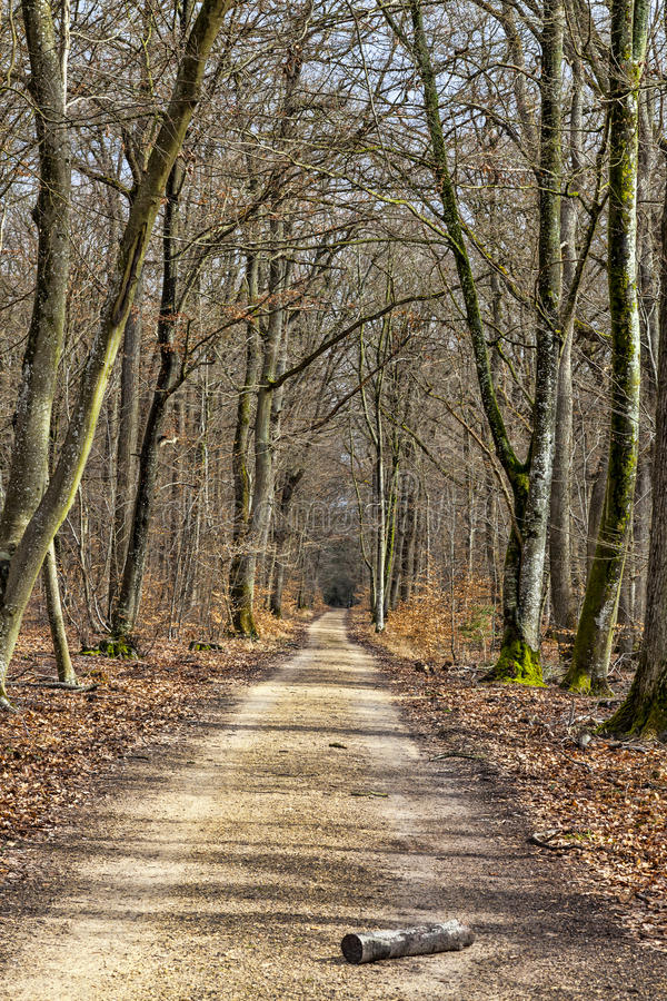 Passeio em uma floresta