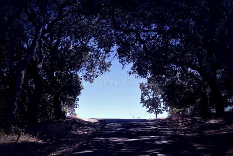 Passeio fora de um trajeto escuro com árvores de floresta e sombras escuras fotografia de stock royalty free