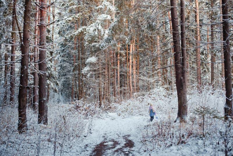 Passeio na floresta do inverno fotografia de stock