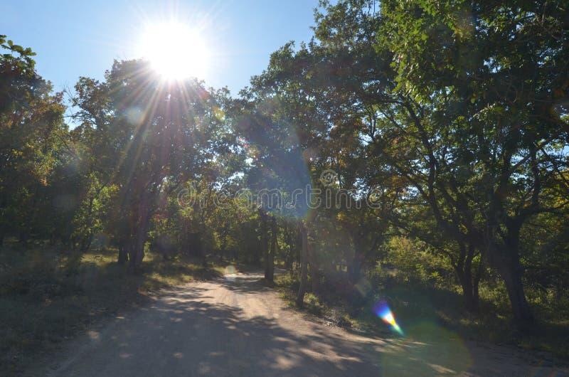 Passeio na floresta do verão, alargamento da lente fotos de stock royalty free