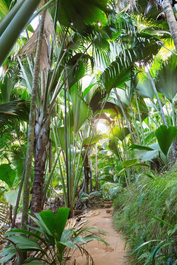 Passeio na floresta Vallee de Mai Nature Reserve May Valley da palma, ilha de Praslin, Seychelles foto de stock