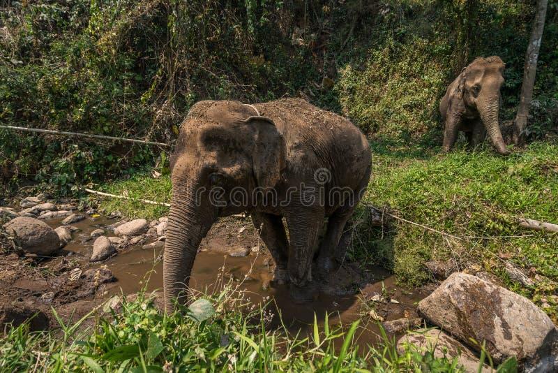Passeio na montanha do elefante imagens de stock royalty free