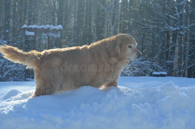 Passeio na tempestade da neve no NH fotos de stock