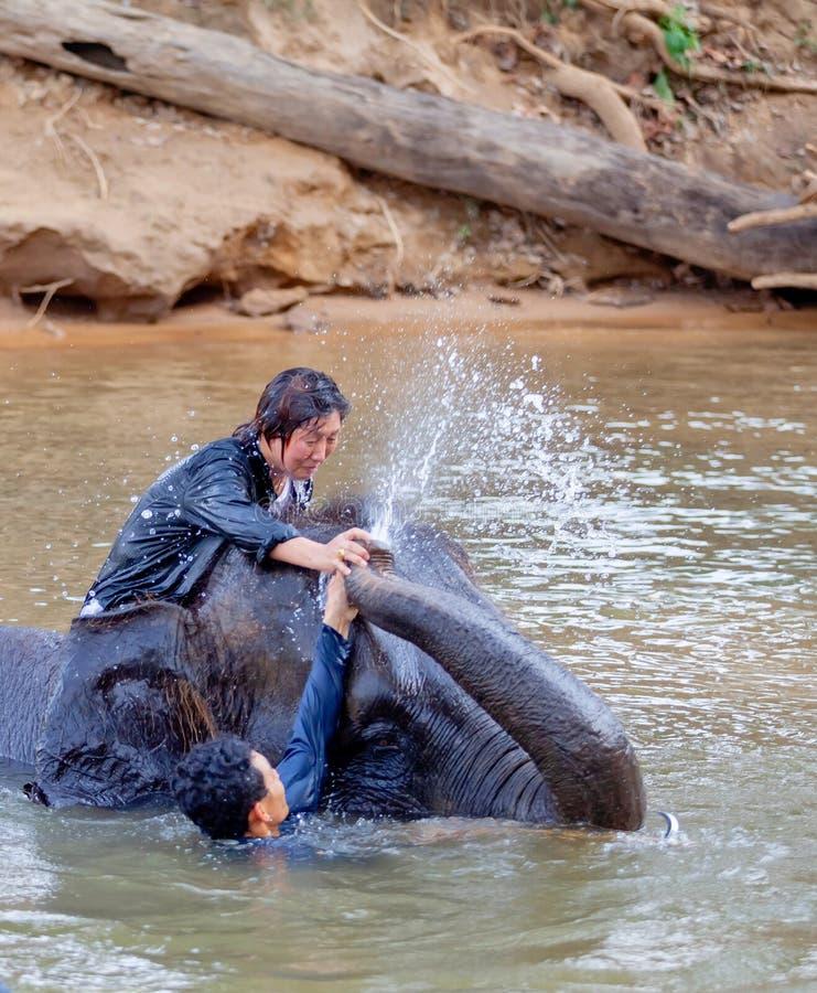 Passeio tailandês da mulher um elefante para tomar um banho no rio Kwae no local de acampamento do elefante de Kanchanaburi Kanch fotografia de stock