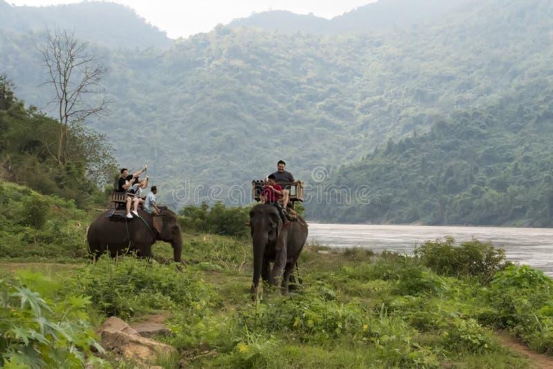 Passeios do grupo do turista atrav?s da selva nas partes traseiras dos elefantes imagem de stock royalty free