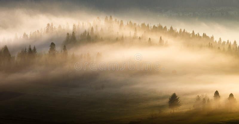 Passerande för Carpathian berg Sinevir dimmig morgon fotografering för bildbyråer
