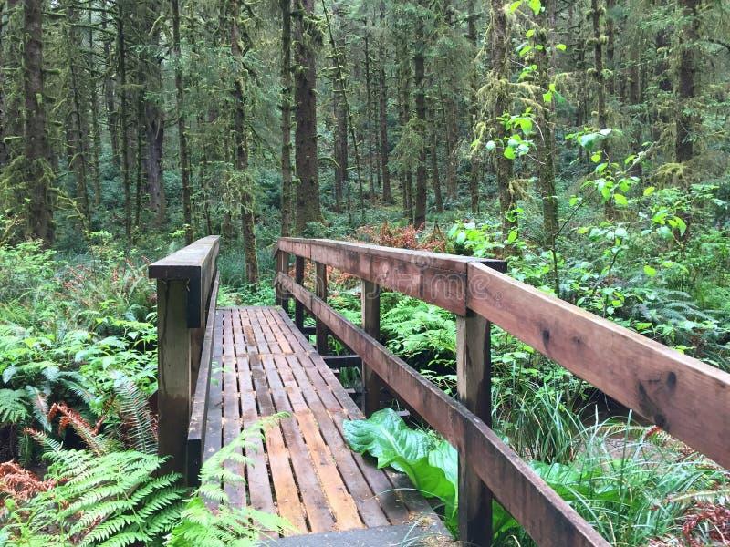 Passerella fuori dalla costa dell'Oregon immagini stock