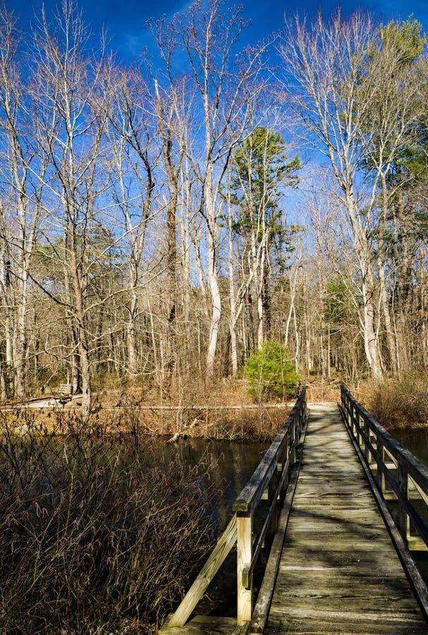 Passerella sopra uno stagno del terreno boscoso immagini stock libere da diritti