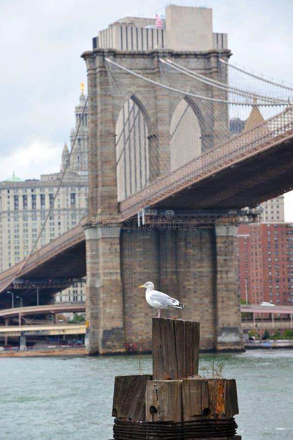 Passerelle de Brooklyn photographie stock