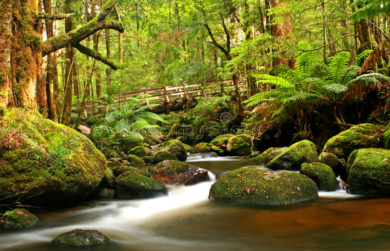 Passerelle de forêt humide images libres de droits