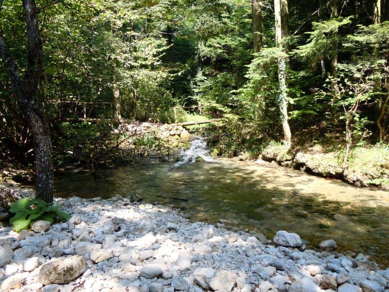 Passerelle en bois au-dessus de fleuve de montagne photos libres de droits