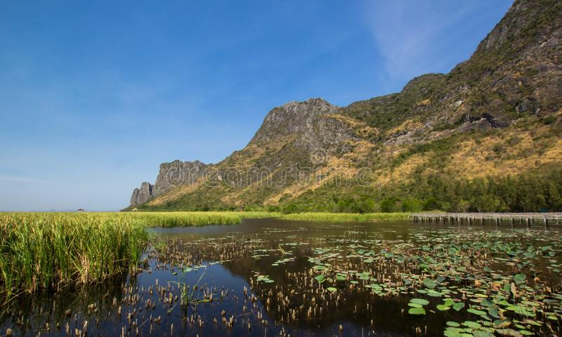 Passerelle en bois dans le lac de lotus images stock
