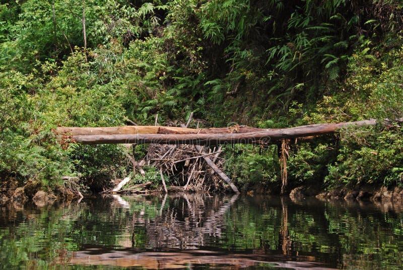 Passerelle normale dans Taman Negara, Malaisie image libre de droits