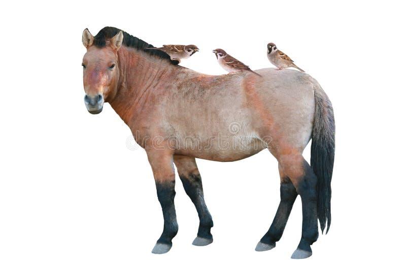 Passeri e cavallo fotografia stock libera da diritti