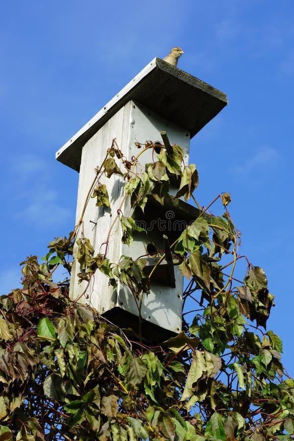 passero che si siede sul tetto dell 39 aviario fotografia