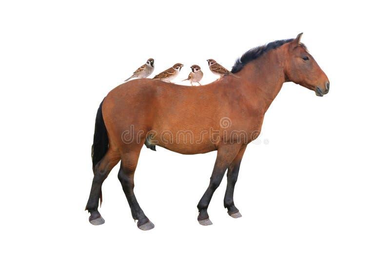 Passero e cavallo immagine stock libera da diritti