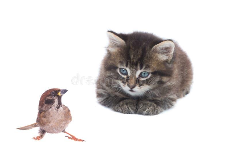 Passero e gattino immagine stock libera da diritti