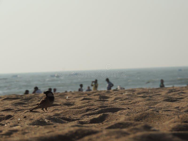 Passero su una spiaggia immagini stock libere da diritti