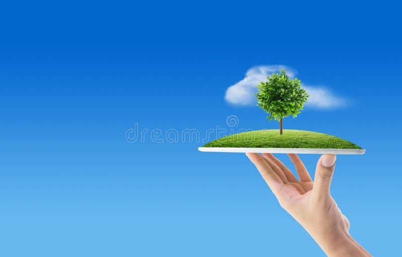 Passi il computer della compressa della tenuta con erba e l'albero del backg della natura fotografie stock libere da diritti
