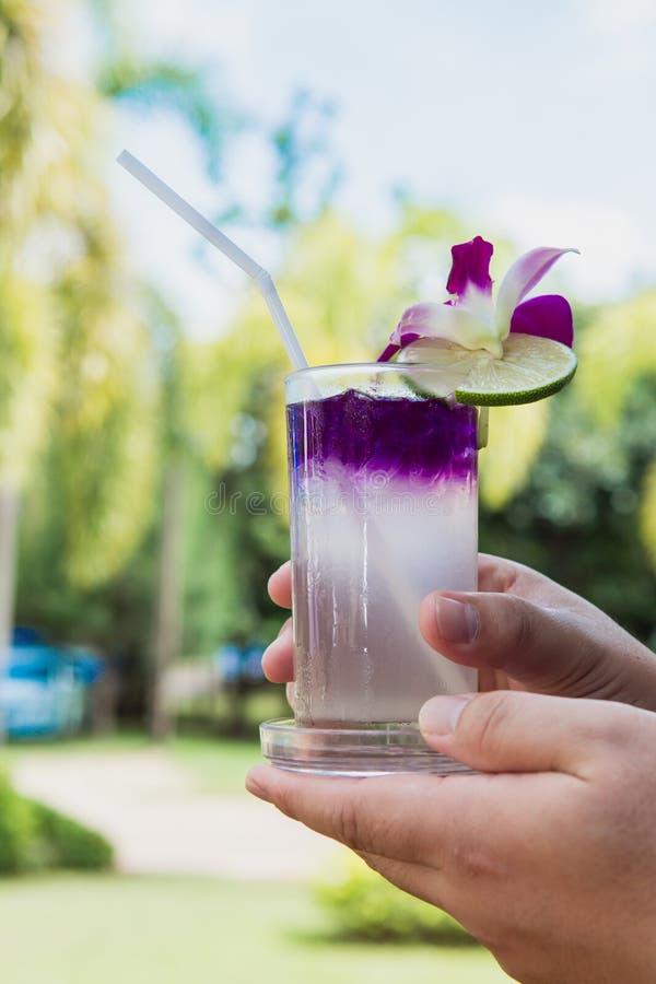 Passi il succo della tenuta del pisello di farfalla con il limone ed il ghiaccio in vetro Bevanda dell'erba per il rinfresco immagini stock libere da diritti