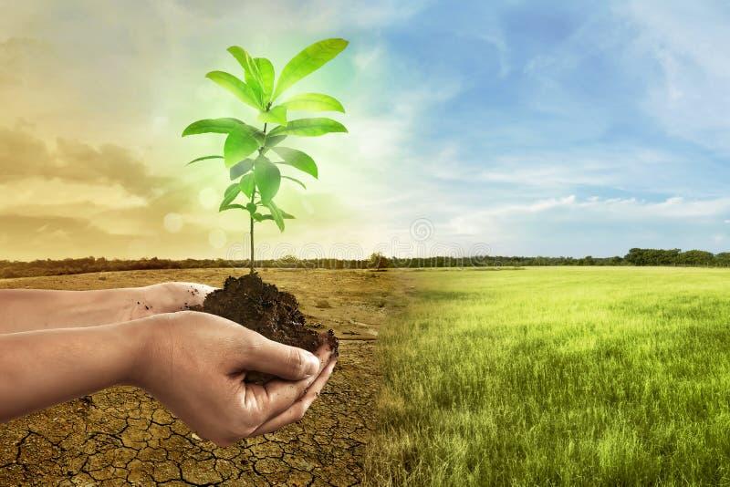 Passi la pianta della tenuta su suolo dentro sopra terra incrinata immagini stock libere da diritti