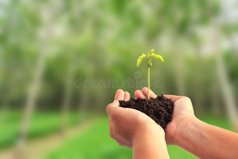 Passi la plantula della tenuta con suolo sul fondo dell'albero della sfuocatura fotografia stock