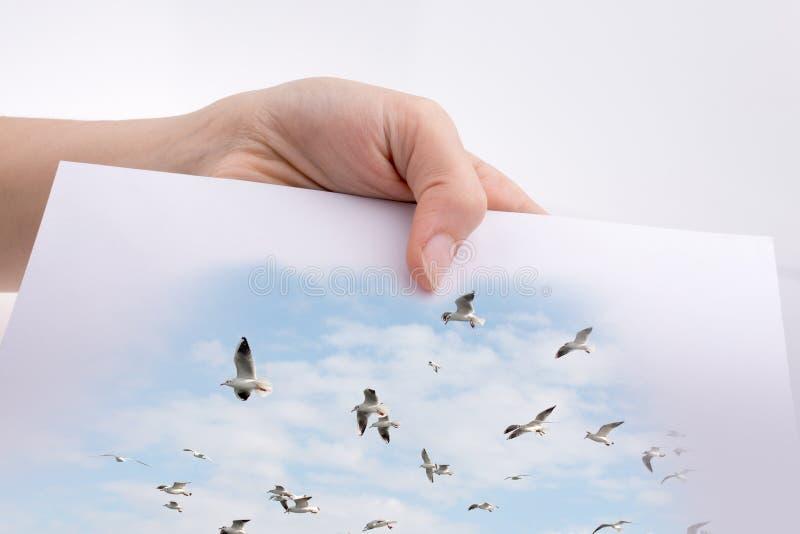 Passi la tenuta del foglio di carta bianco con i punti di vista dei gabbiani fotografie stock libere da diritti