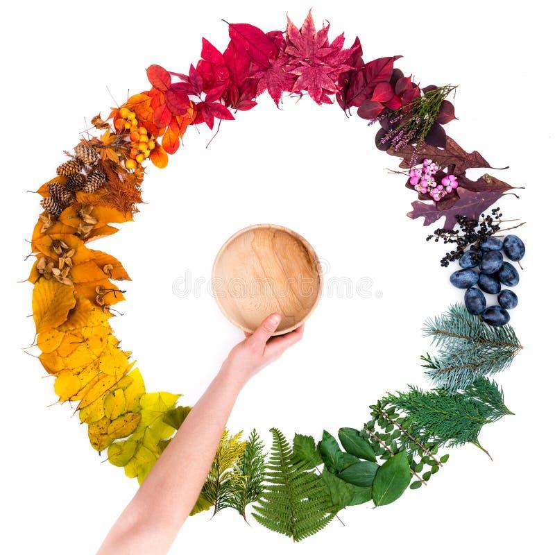 Passi la tenuta della ciotola di legno sopra il cerchio autunnale variopinto fatto delle foglie fotografia stock libera da diritti