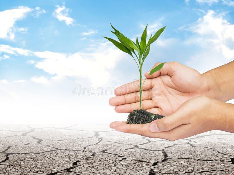 Passi la tenuta della pianta piccola sopra terra e cielo blu asciutti immagini stock