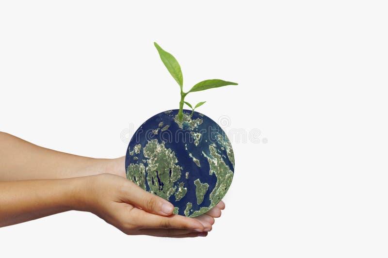 Passi la terra della tenuta e piccolo albero, concetto in mondo di risparmi, energia e conservazione dell'ambiente fotografia stock