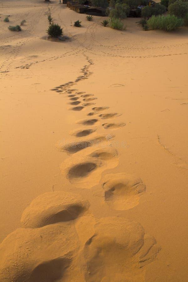 Passi nelle dune fotografia stock