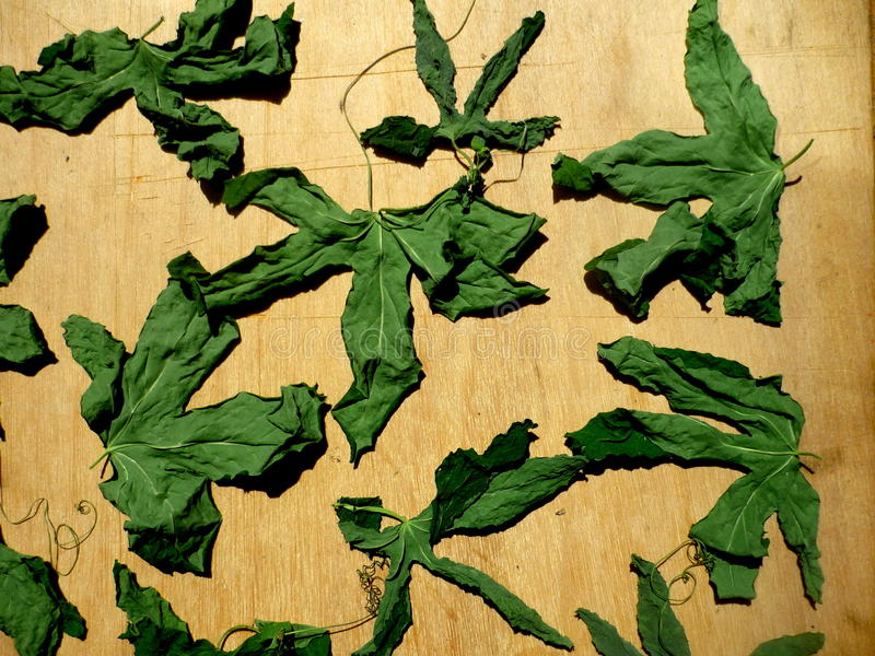 passiflora στοκ φωτογραφίες