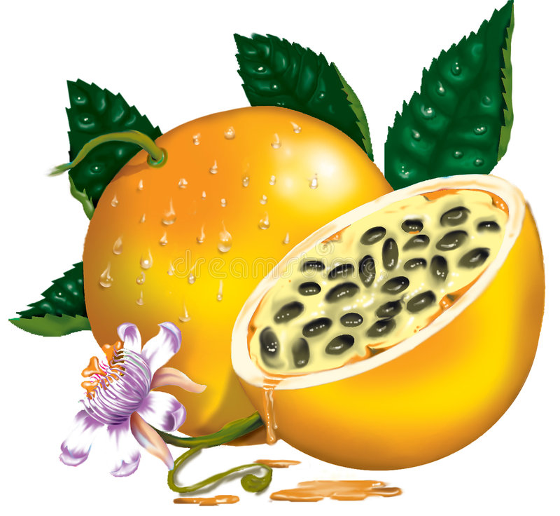 Passiflore comestible de passiflore illustration stock