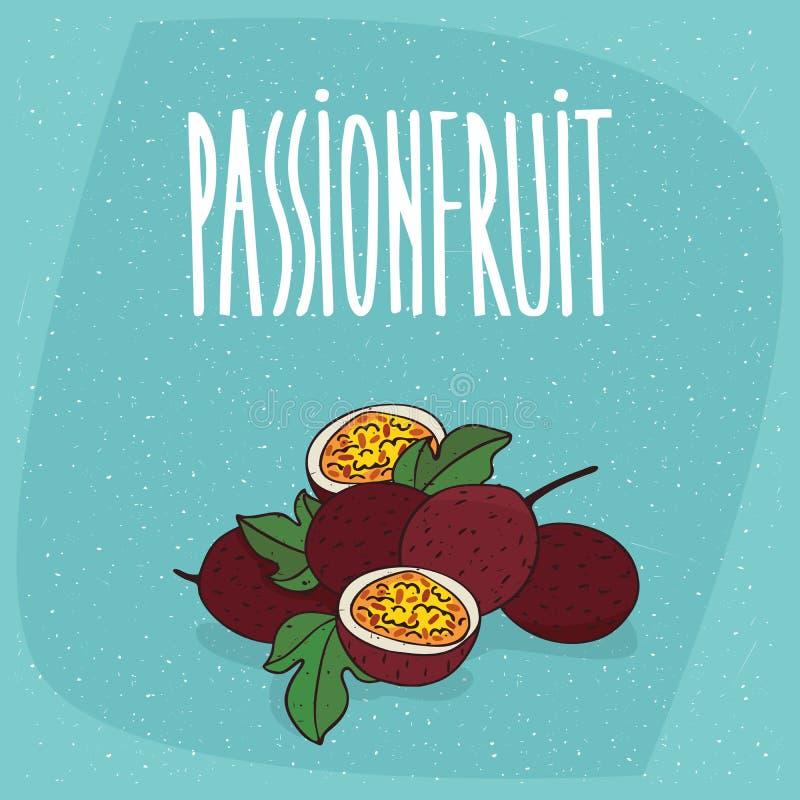 Passiflore comestible de passiflore ou passionfruit mûre d'isolement illustration de vecteur