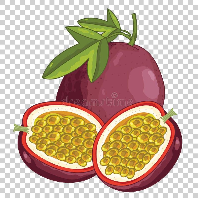 Passiflore comestible de passiflore, vecteur illustration libre de droits