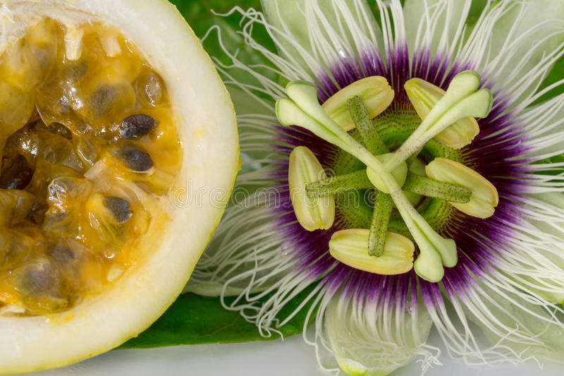 Passion fruit flower with ripe cut passion fruit, macro. Passion fruit flower with ripe cross cuting passion fruit, close up royalty free stock photos