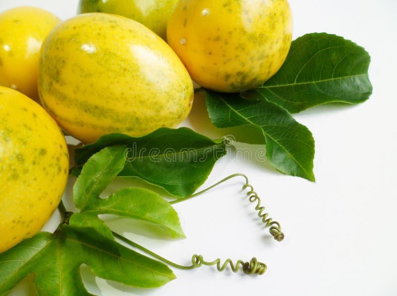 Download Passion Fruit (Passiflora Edulis) Stock Photo - Image: 28625588