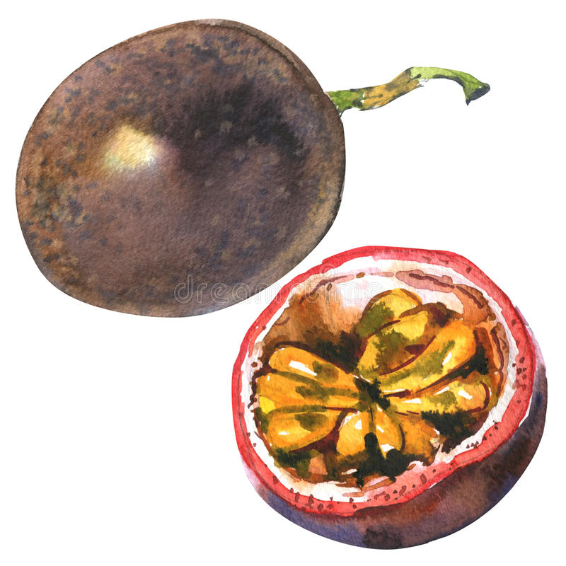 Passion fruit, passionfruit, maraquia, whole and half, slice, , watercolor illustration on white. Passion fruit, passionfruit, maraquia, whole and half, slice royalty free stock photos