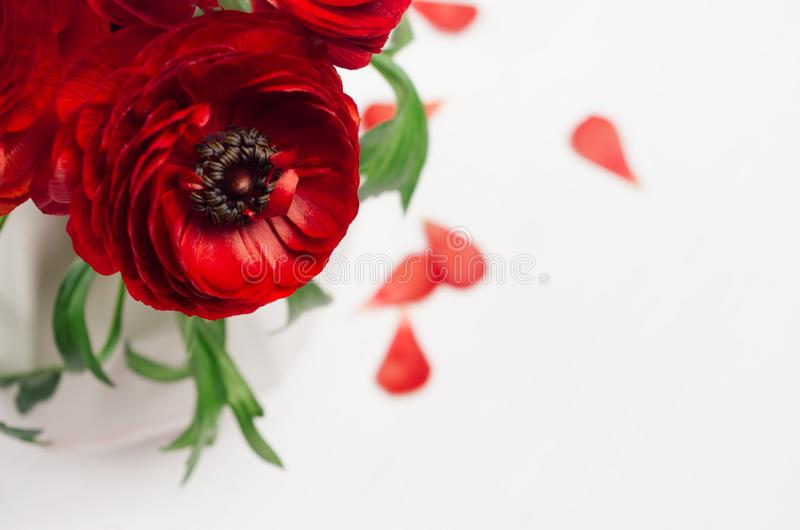 Passionate red flowers in white vase with petals closeup on wood background. Spring floral background. royalty free stock images