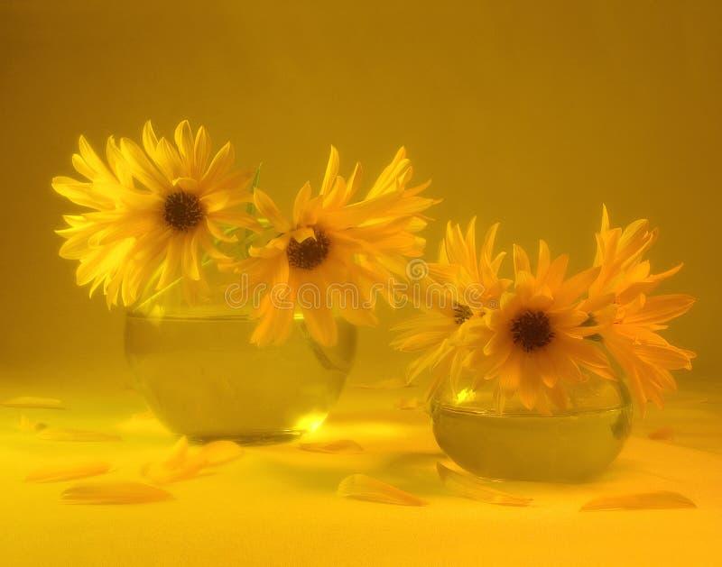 Passione gialla fotografia stock libera da diritti