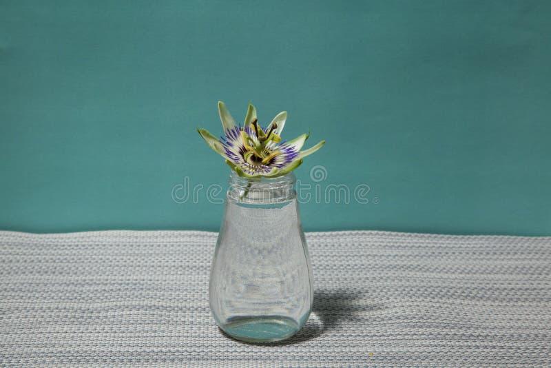 passionflower zdjęcie royalty free