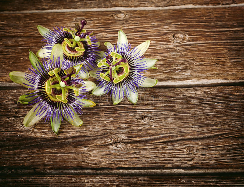 Passionflower kwiat zdjęcie stock