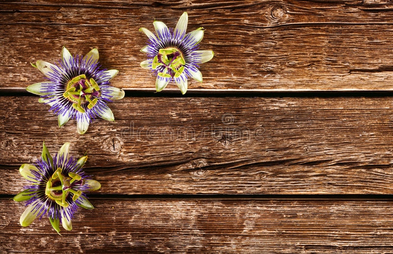 Passionflower kwiat zdjęcia royalty free