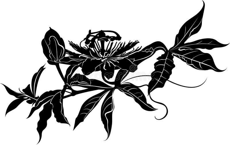 passionflower Pasionaria de la pasionaria Flor de la pasión libre illustration