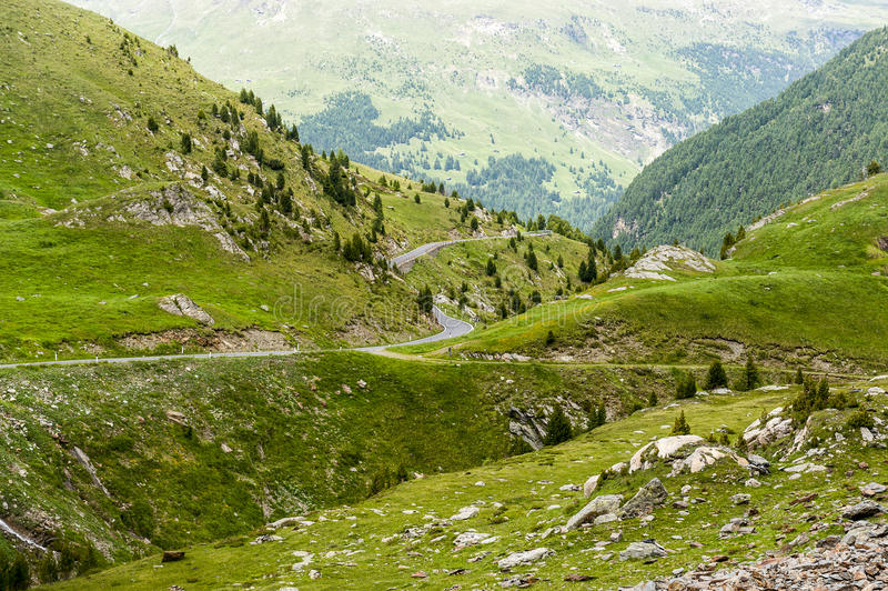 Download Passo Gavia stock photo. Image of tree, conifer, sondrio - 25849524