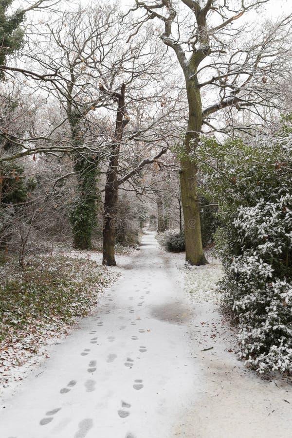 Passos em um trajeto coberto de neve imagem de stock