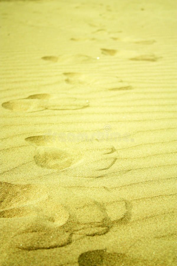 Passos na areia dourada na praia imagens de stock royalty free
