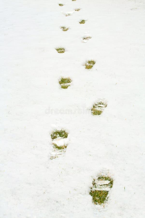 Passos na neve na grama amarela verde Terra coberta com a neve fresca e uma cópia do footrint humano Feche acima da neve branca foto de stock royalty free