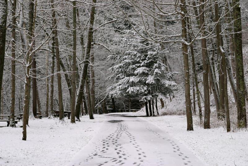 Passos na neve recentemente caída foto de stock